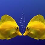 baci pesci